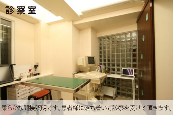 豊中 動物病院 診察室