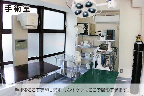 豊中 動物病院 手術室